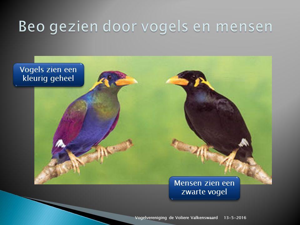 Vogels zien een kleurig geheel Mensen zien een zwarte vogel 13-5-2016 Vogelvereniging de Voliere Valkenswaard