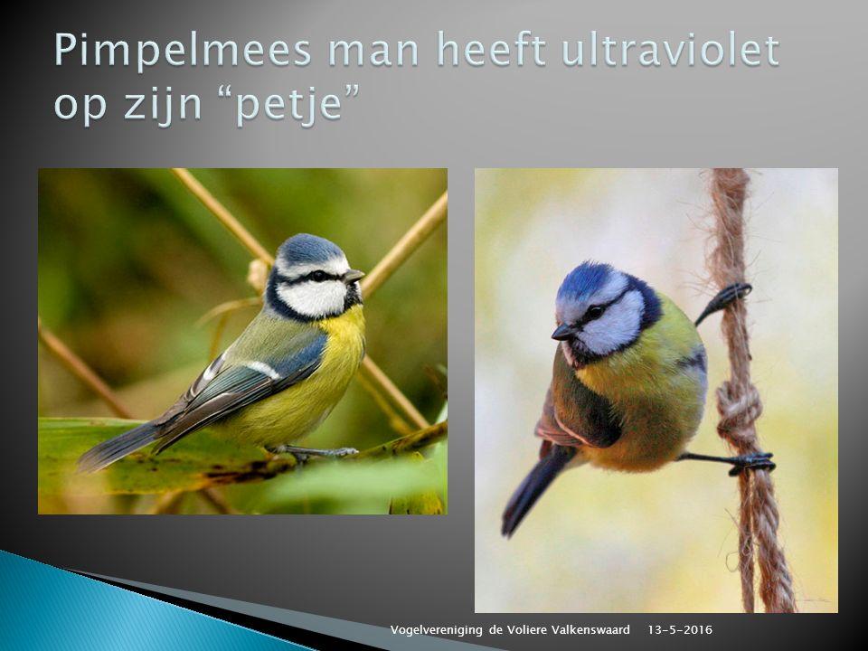13-5-2016 Vogelvereniging de Voliere Valkenswaard