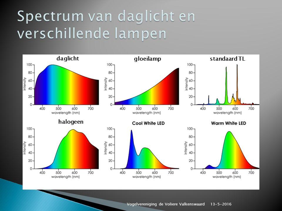 daglicht gloeilampstandaard TL halogeen 13-5-2016 Vogelvereniging de Voliere Valkenswaard