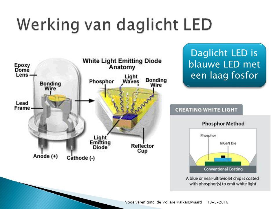 Daglicht LED is blauwe LED met een laag fosfor 13-5-2016 Vogelvereniging de Voliere Valkenswaard