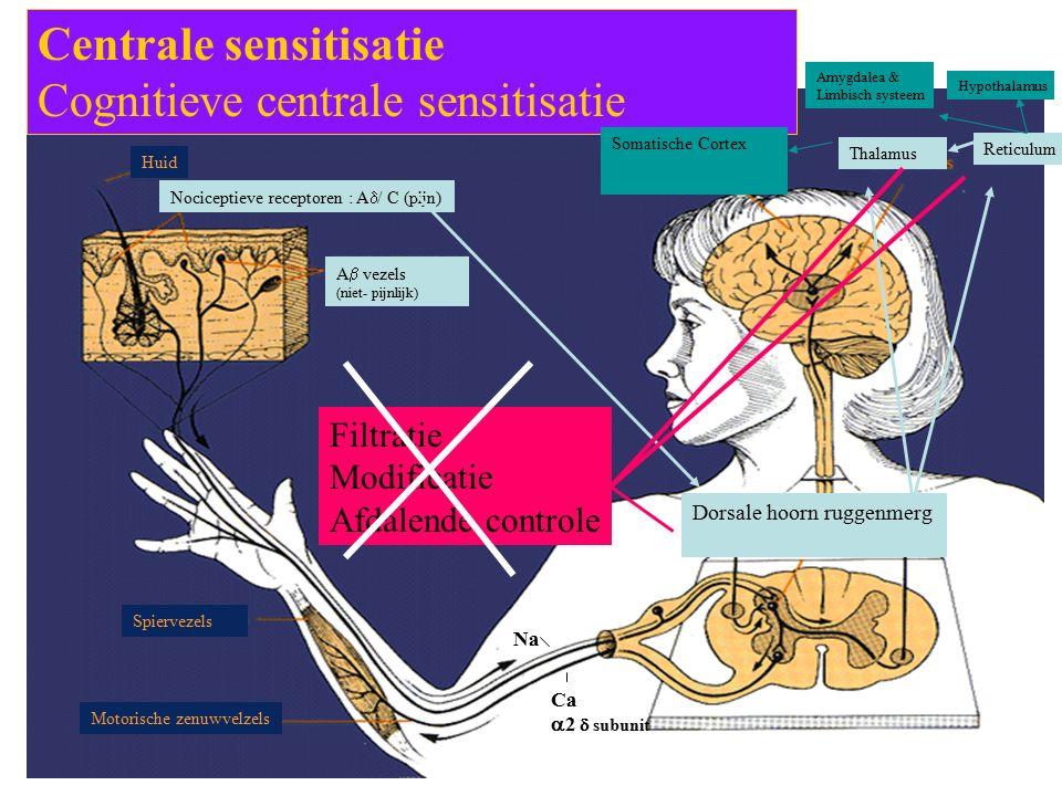 Centrale sensitisatie Cognitieve centrale sensitisatie Nociceptieve receptoren : A  / C (pijn) Dorsale hoorn ruggenmerg Thalamus Reticulum Somatische Cortex Amygdalea & Limbisch systeem Hypothalamus Filtratie Modificatie Afdalende controle Na Ca  2  subunit A  vezels (niet- pijnlijk) Huid Spiervezels Motorische zenuwvelzels