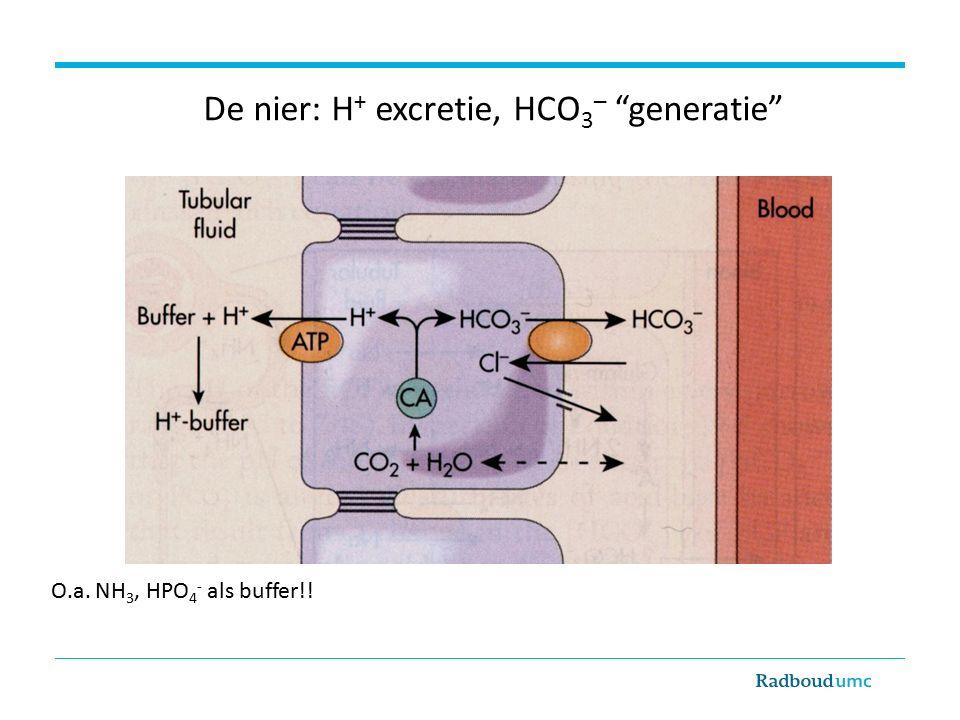 De nier: H + excretie, HCO 3 – generatie O.a.NH 3, HPO 4 - als buffer!.