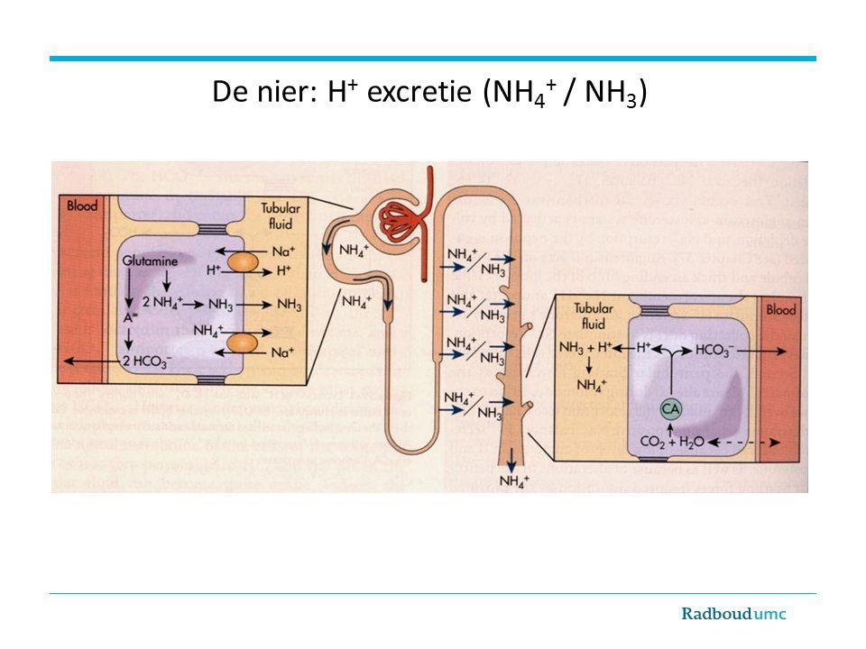 De nier: H + excretie (NH 4 + / NH 3 )