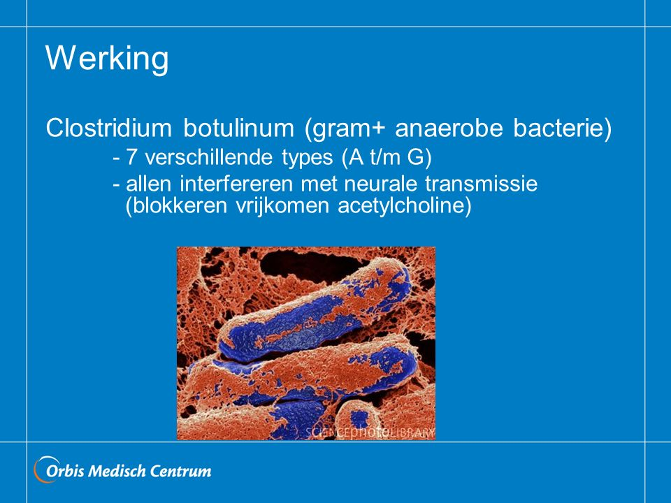 Werking Clostridium botulinum (gram+ anaerobe bacterie) - 7 verschillende types (A t/m G) - allen interfereren met neurale transmissie (blokkeren vrijkomen acetylcholine)