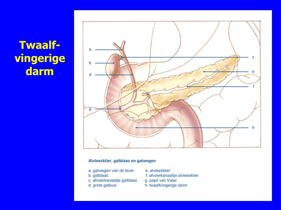 Twaalf- vingerige darm 11