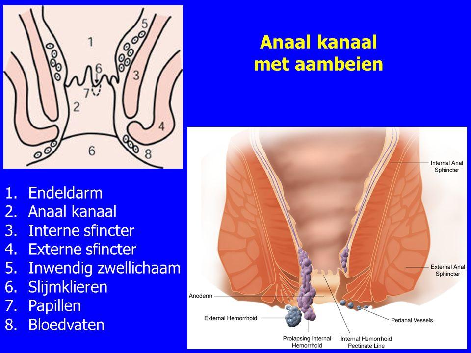 Anaal kanaal met aambeien 33 1.Endeldarm 2.Anaal kanaal 3.Interne sfincter 4.Externe sfincter 5.Inwendig zwellichaam 6.Slijmklieren 7.Papillen 8.Bloedvaten