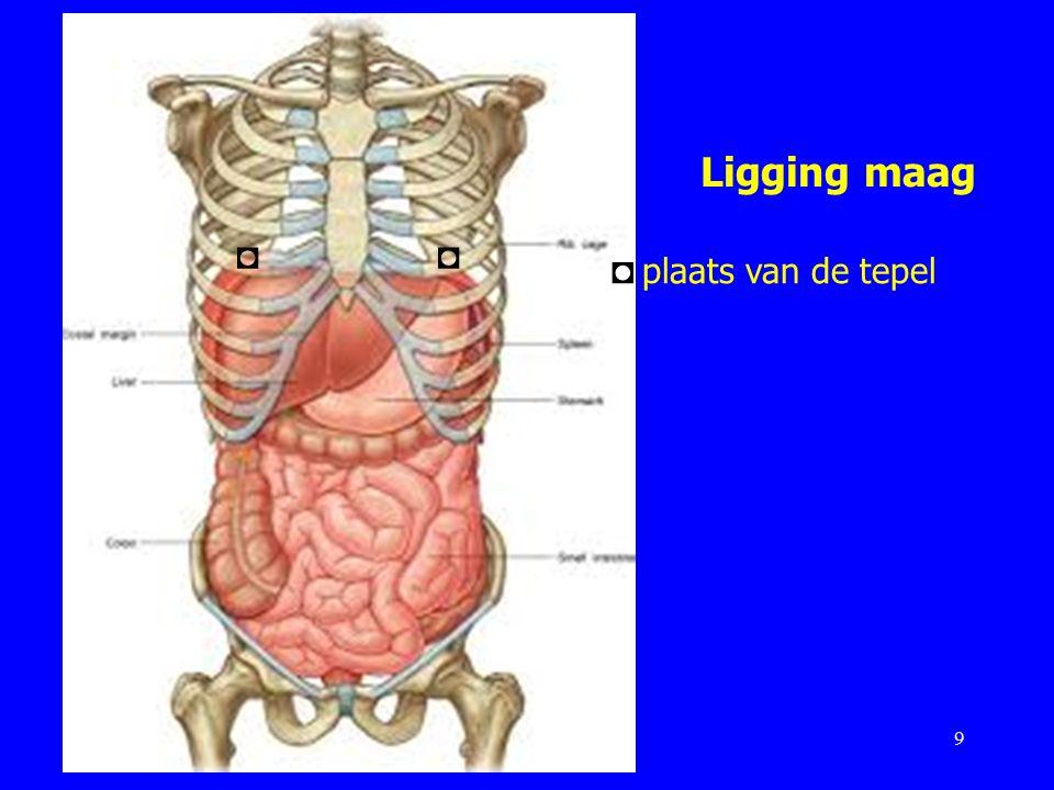 Ligging maag 9 ◘◘ ◘ plaats van de tepel