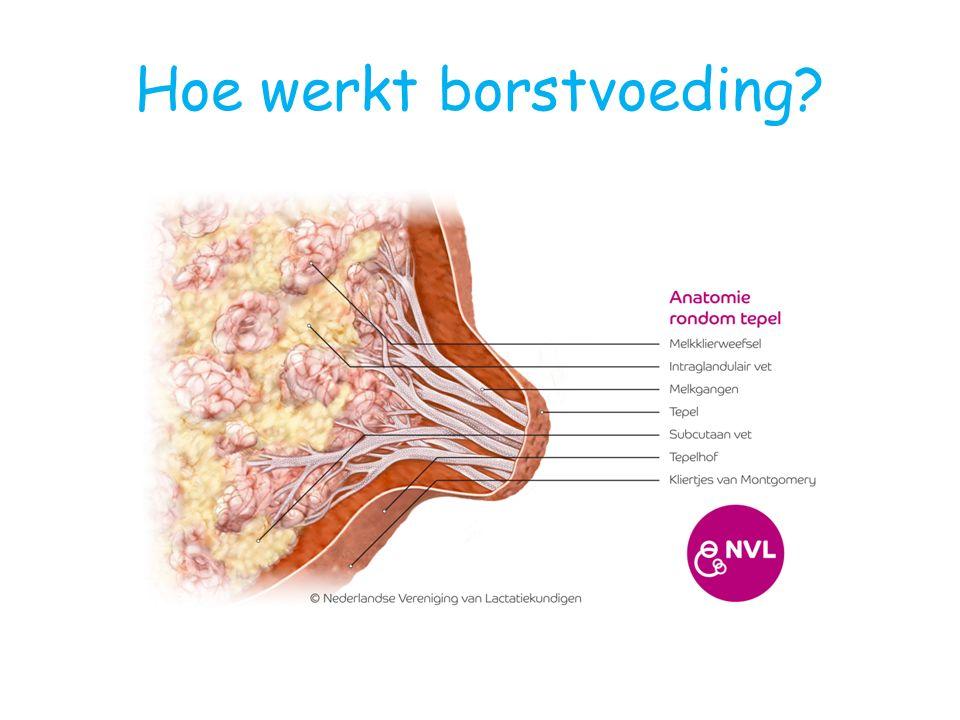 Hoe werkt borstvoeding?
