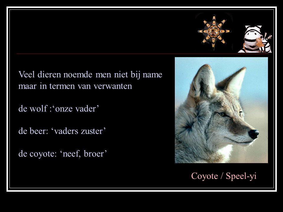 Veel dieren noemde men niet bij name maar in termen van verwanten de wolf :'onze vader' de beer: 'vaders zuster' de coyote: 'neef, broer' Coyote / Speel-yi