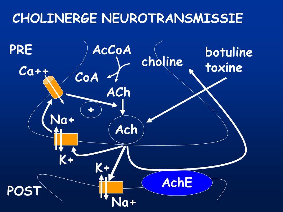 CHOLINERGE NEUROTRANSMISSIE PRE POST AcCoA CoA choline ACh Ach AchE Na+ K+ Na+ K+ Ca++ + botuline toxine