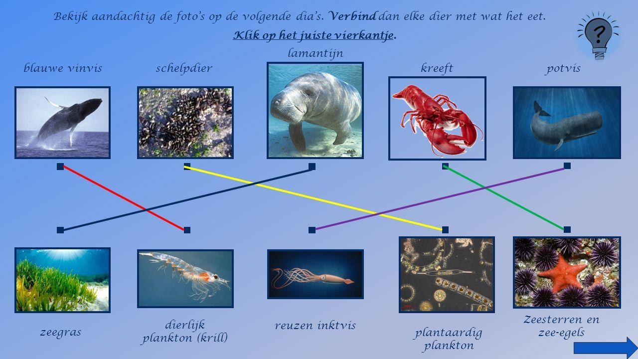 Bekijk aandachtig de foto's op de volgende dia's. Verbind dan elke dier met wat het eet.