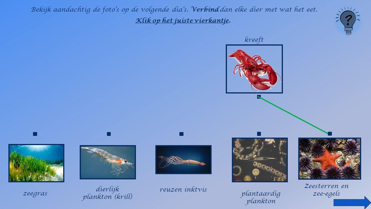 Ken je nog een zeereus die zich voedt met plankton de walvishaai