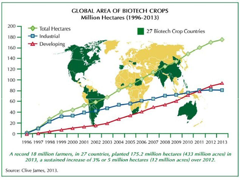 175 miljoen hectare (2,5 % van het globale areaal en 10 % van akkerbouw) in 28 landen in 2012; 80 % van het ggo areaal bevindt zich in de VS, Brazilië en Argentinië Opdeling globaal ggo-areaal: 47 % HT-soja 23 % Bt-maïs 9 % Bt-katoen 5 % HT-koolzaad (Canola) In Europa beperkt tot +/- 0.1 miljoen ha Vooral Spanje met Bt-maïs (MON810) Beperkt areaal in Portugal, Tsjechië en Slovakije - transgene soja in Roemenië Weggevallen in Duitsland, Zweden en Polen Wereldwijd ggo-areaal