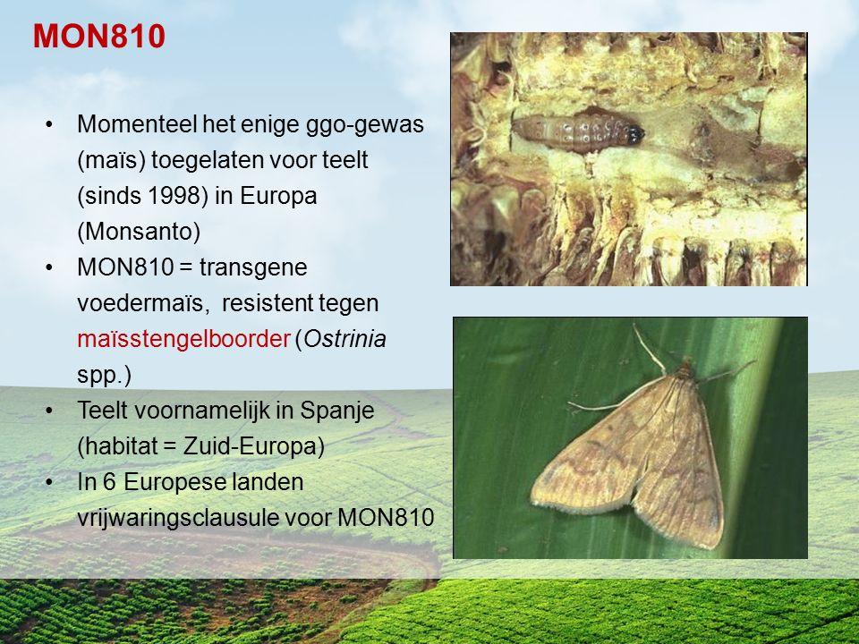 Momenteel het enige ggo-gewas (maïs) toegelaten voor teelt (sinds 1998) in Europa (Monsanto) MON810 = transgene voedermaïs, resistent tegen maïsstenge