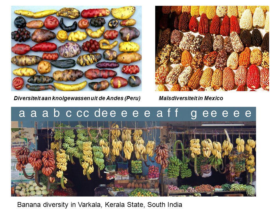 Diversiteit aan knolgewassen uit de Andes (Peru)Maïsdiversiteit in Mexico Banana diversity in Varkala, Kerala State, South India