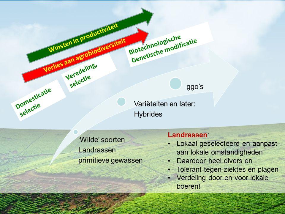 Domesticatie selectie Veredeling, selectie Biotechnologische Genetische modificatie Verlies aan agrobiodiversiteit Winsten in productiviteit Landrasse