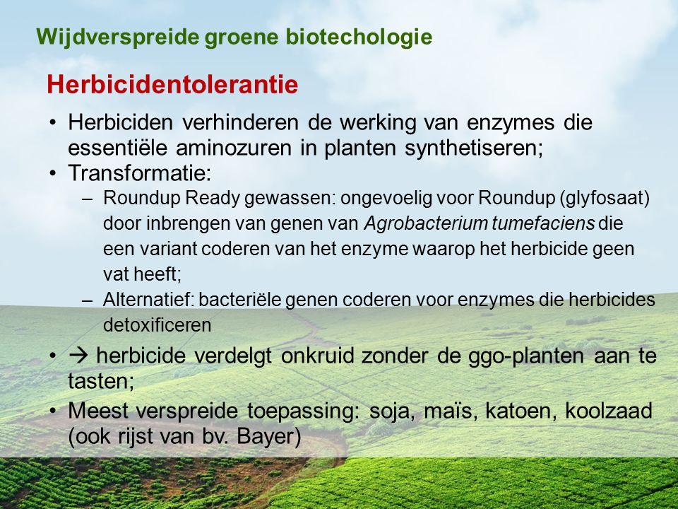 Herbicidentolerantie Herbiciden verhinderen de werking van enzymes die essentiële aminozuren in planten synthetiseren; Transformatie: –Roundup Ready g