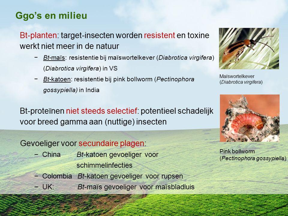 Ggo's en milieu Bt-planten: target-insecten worden resistent en toxine werkt niet meer in de natuur −Bt-maïs: resistentie bij maïswortelkever (Diabrot