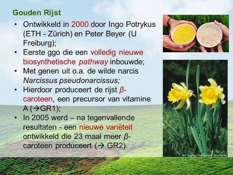 Gouden Rijst Ontwikkeld in 2000 door Ingo Potrykus (ETH - Zürich) en Peter Beyer (U Freiburg); Eerste ggo die een volledig nieuwe biosynthetische path
