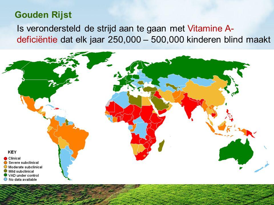 Gouden Rijst Is verondersteld de strijd aan te gaan met Vitamine A- deficiëntie dat elk jaar 250,000 – 500,000 kinderen blind maakt