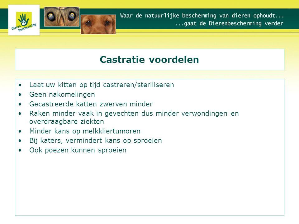 Castratie voordelen Laat uw kitten op tijd castreren/steriliseren Geen nakomelingen Gecastreerde katten zwerven minder Raken minder vaak in gevechten