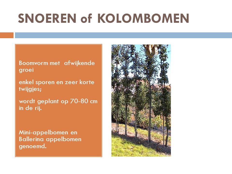 SNOEREN of KOLOMBOMEN Boomvorm met afwijkende groei enkel sporen en zeer korte twijgjes; wordt geplant op 70-80 cm in de rij. Mini-appelbomen en Balle