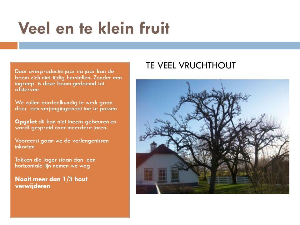 Veel en te klein fruit Door overproductie jaar na jaar kan de boom zich niet tijdig herstellen. Zonder een ingreep is deze boom gedoemd tot afsterven