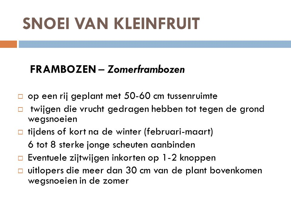SNOEI VAN KLEINFRUIT FRAMBOZEN – Zomerframbozen  op een rij geplant met 50-60 cm tussenruimte  twijgen die vrucht gedragen hebben tot tegen de grond
