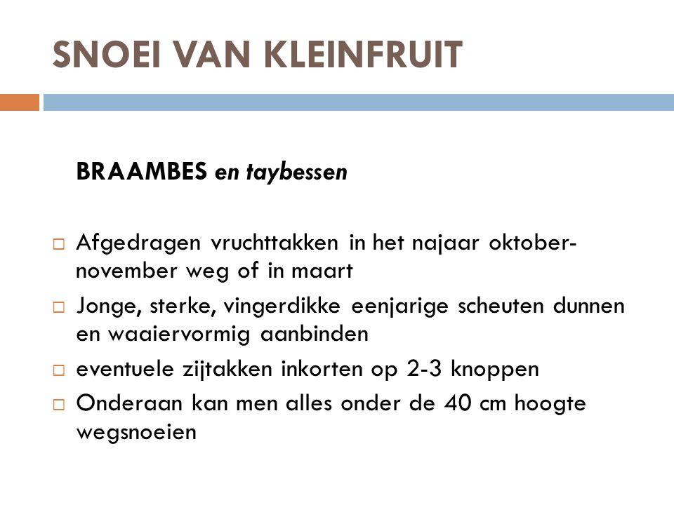 SNOEI VAN KLEINFRUIT BRAAMBES en taybessen  Afgedragen vruchttakken in het najaar oktober- november weg of in maart  Jonge, sterke, vingerdikke eenj
