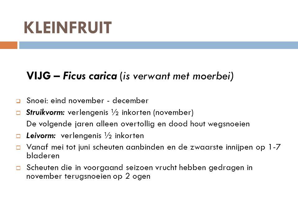 KLEINFRUIT VIJG – Ficus carica (is verwant met moerbei)  Snoei: eind november - december  Struikvorm: verlengenis ½ inkorten (november) De volgende