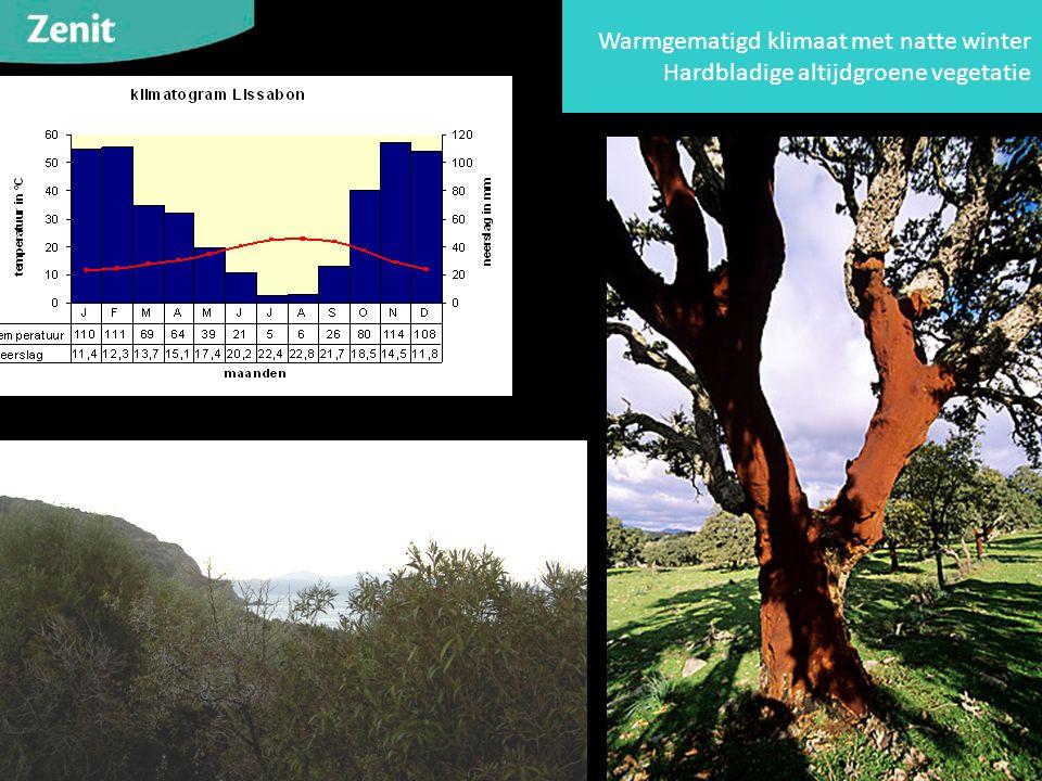 Warmgematigd klimaat met natte winter Hardbladige altijdgroene vegetatie
