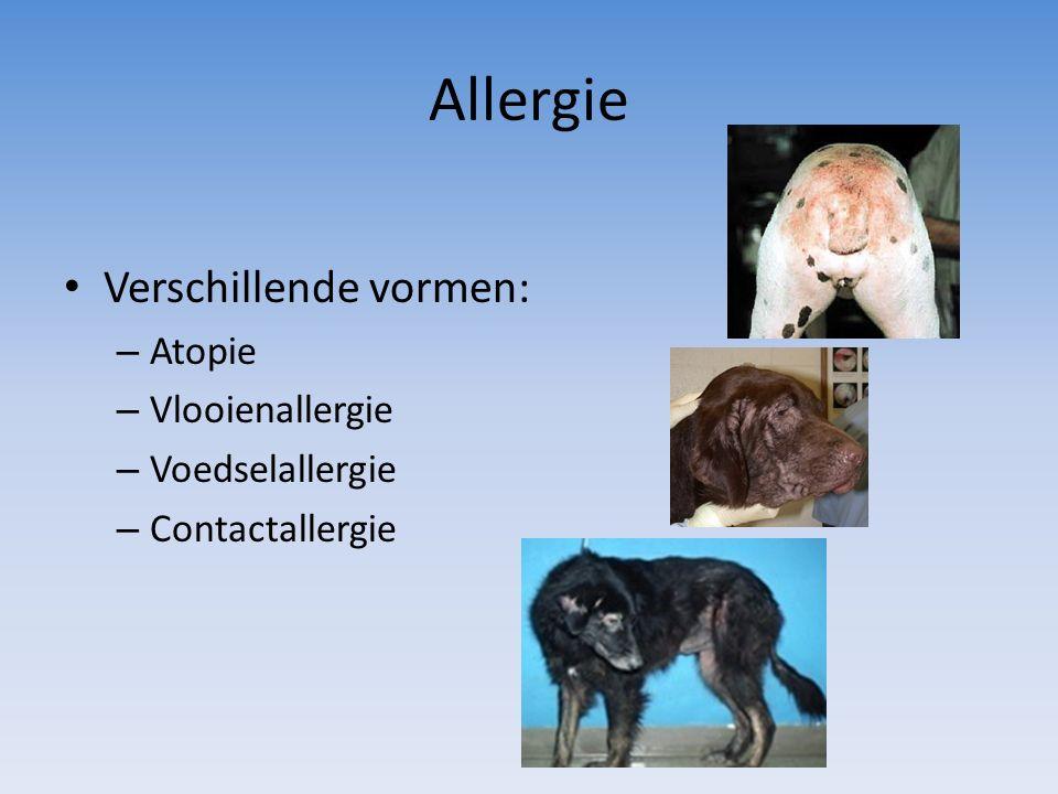 Allergie Verschillende vormen: – Atopie – Vlooienallergie – Voedselallergie – Contactallergie