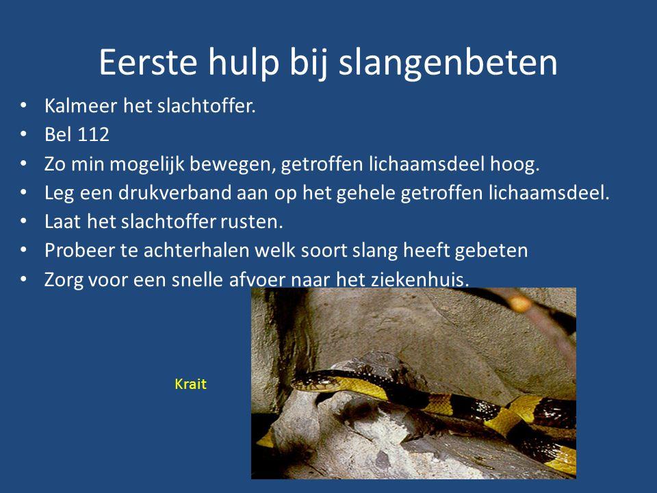 Eerste hulp bij slangenbeten Kalmeer het slachtoffer.