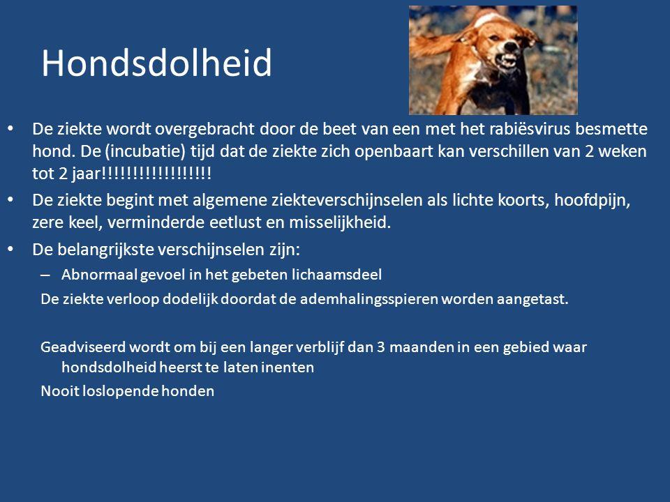 Hondsdolheid De ziekte wordt overgebracht door de beet van een met het rabiësvirus besmette hond.