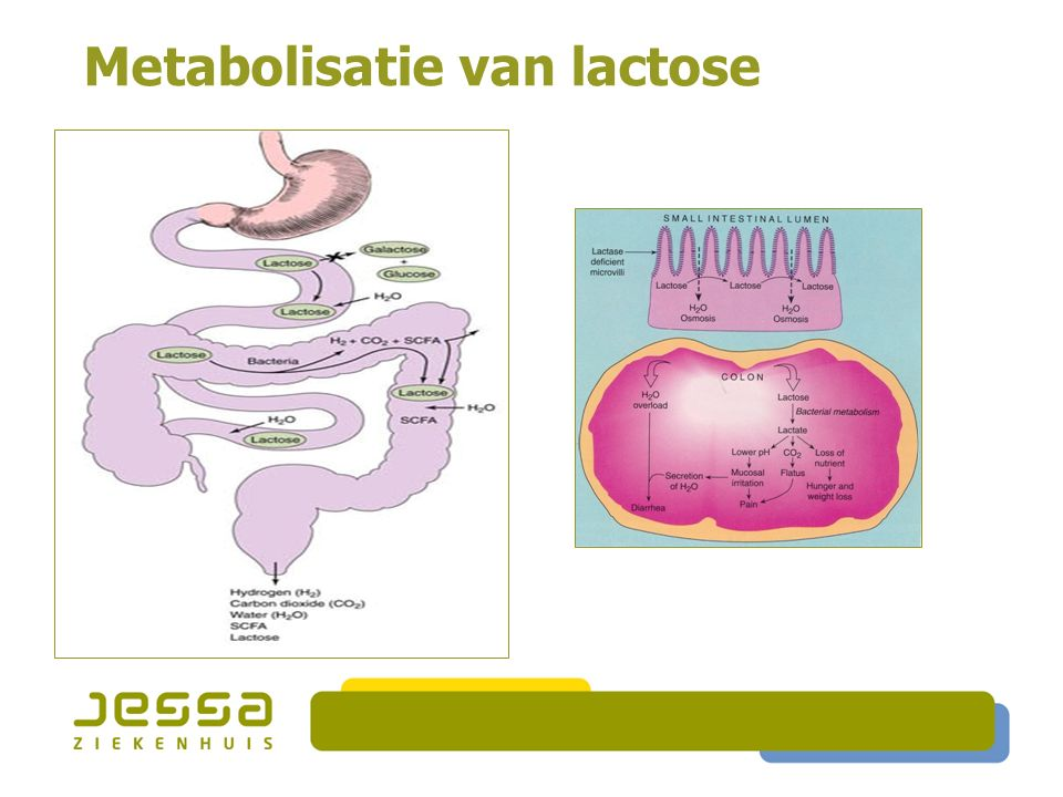 Metabolisatie van lactose