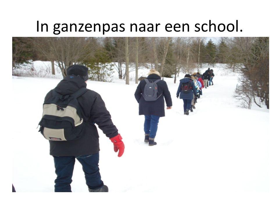 In ganzenpas naar een school.