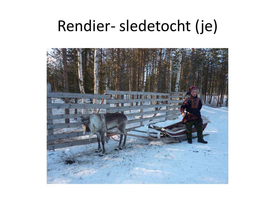 Rendier- sledetocht (je)