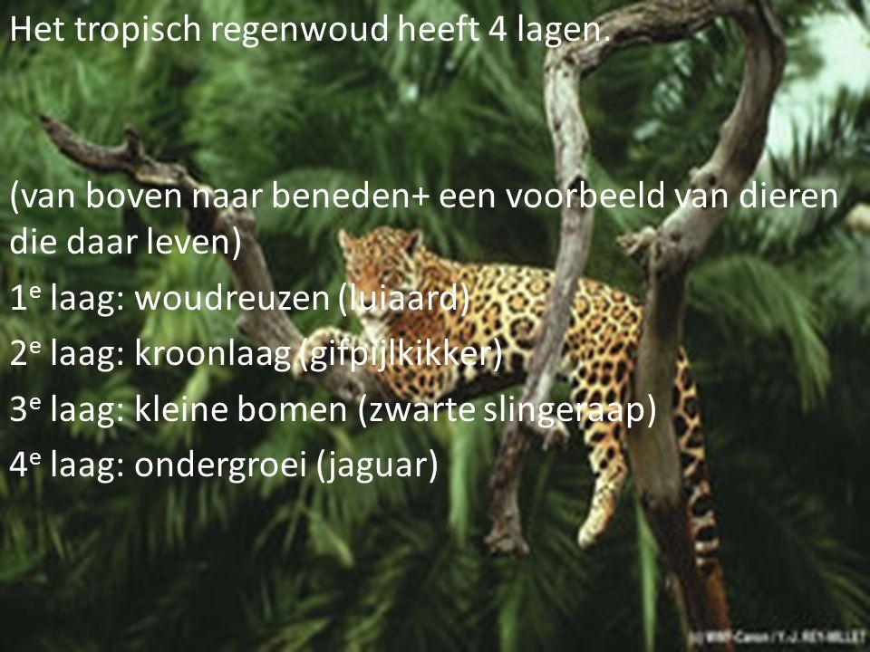 Het tropisch regenwoud heeft 4 lagen. (van boven naar beneden+ een voorbeeld van dieren die daar leven) 1 e laag: woudreuzen (luiaard) 2 e laag: kroon