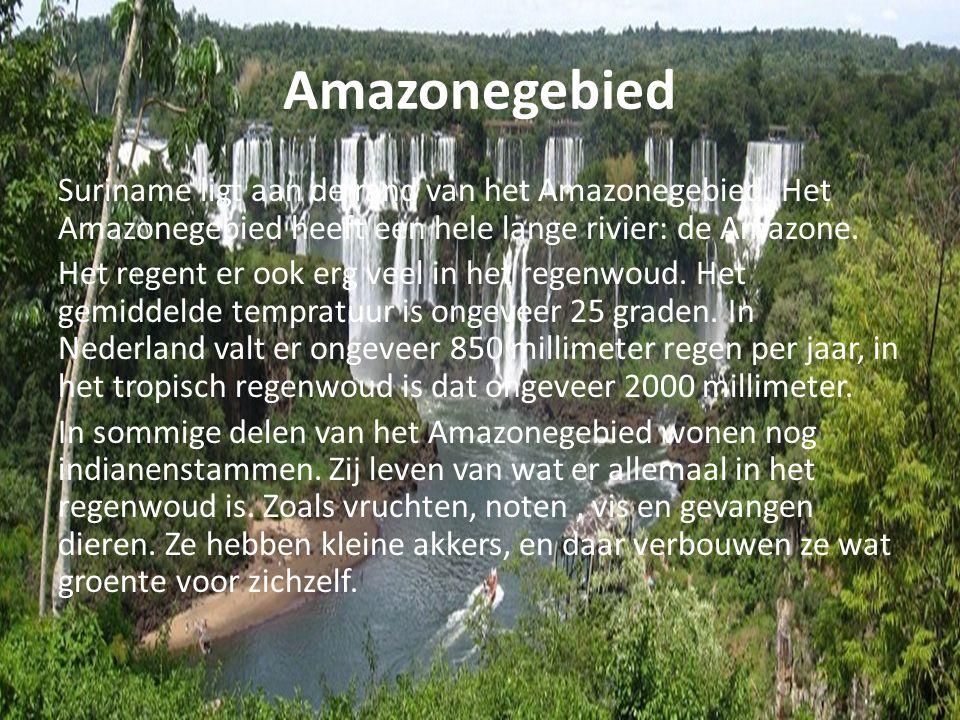 Amazonegebied Suriname ligt aan de rand van het Amazonegebied. Het Amazonegebied heeft een hele lange rivier: de Amazone. Het regent er ook erg veel i