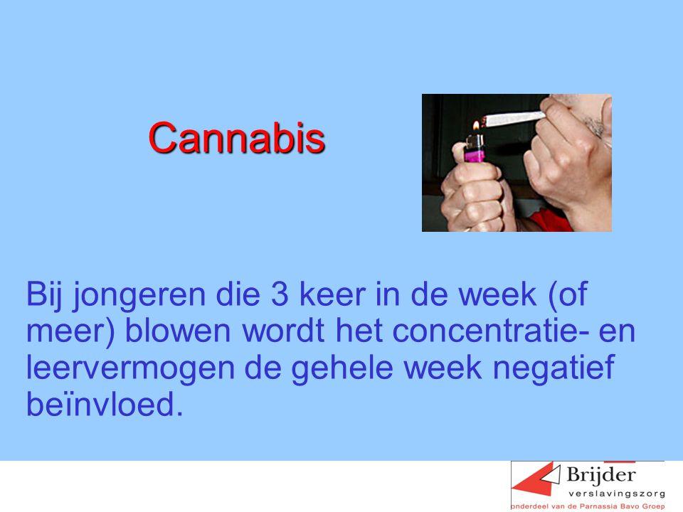 Cannabis Bij jongeren die 3 keer in de week (of meer) blowen wordt het concentratie- en leervermogen de gehele week negatief beïnvloed.