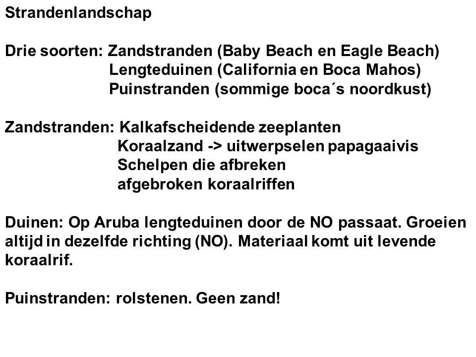 Strandenlandschap Drie soorten: Zandstranden (Baby Beach en Eagle Beach) Lengteduinen (California en Boca Mahos) Puinstranden (sommige boca´s noordkus