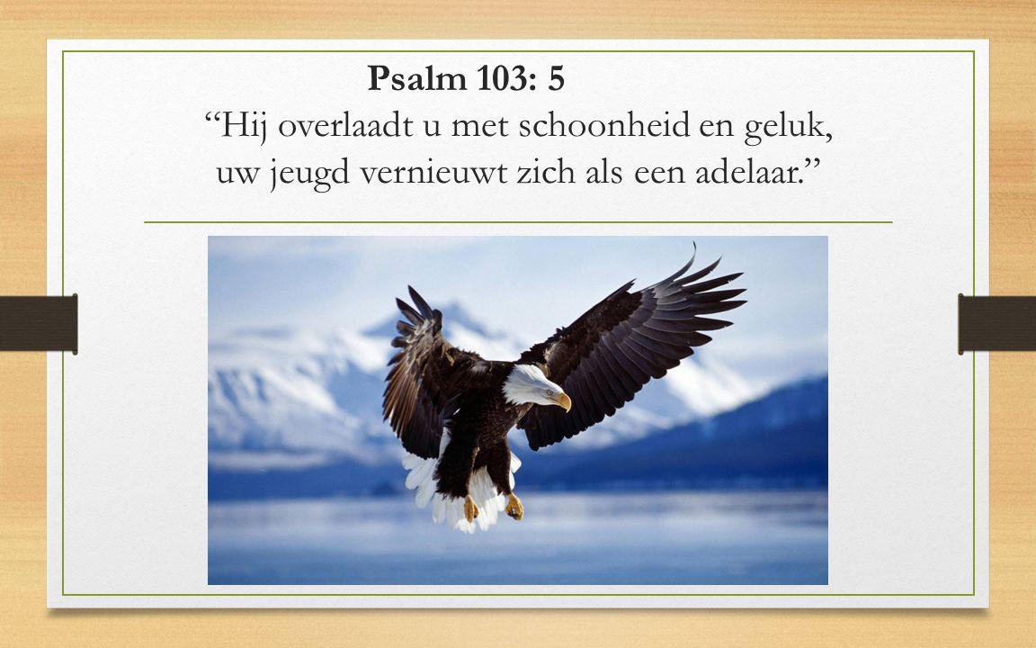 Psalm 103: 5 Hij overlaadt u met schoonheid en geluk, uw jeugd vernieuwt zich als een adelaar.