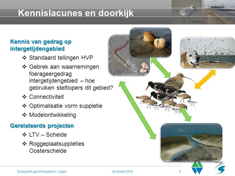 Kennislacunes en doorkijk 28 januari 2016Ecologisch gericht suppleren - vogels9 Kennis van gedrag op intergetijdengebied  Standaard tellingen HVP  G