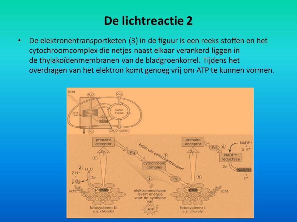 De lichtreactie 2 De elektronentransportketen (3) in de figuur is een reeks stoffen en het cytochroomcomplex die netjes naast elkaar verankerd liggen