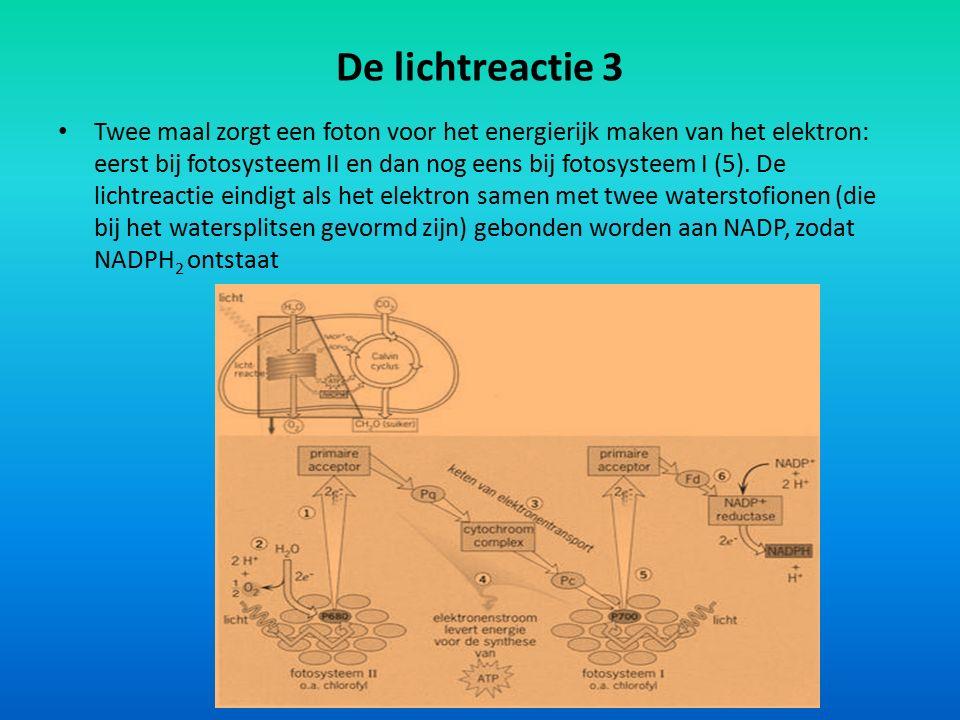De lichtreactie 3 Twee maal zorgt een foton voor het energierijk maken van het elektron: eerst bij fotosysteem II en dan nog eens bij fotosysteem I (5