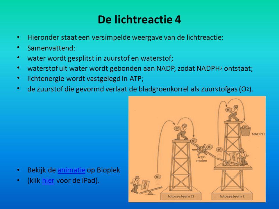 De lichtreactie 4 Hieronder staat een versimpelde weergave van de lichtreactie: Samenvattend: water wordt gesplitst in zuurstof en waterstof; watersto