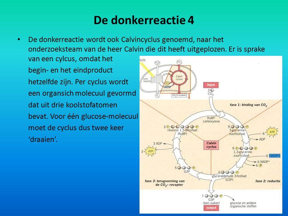 De donkerreactie 4 De donkerreactie wordt ook Calvincyclus genoemd, naar het onderzoeksteam van de heer Calvin die dit heeft uitgeplozen. Er is sprake