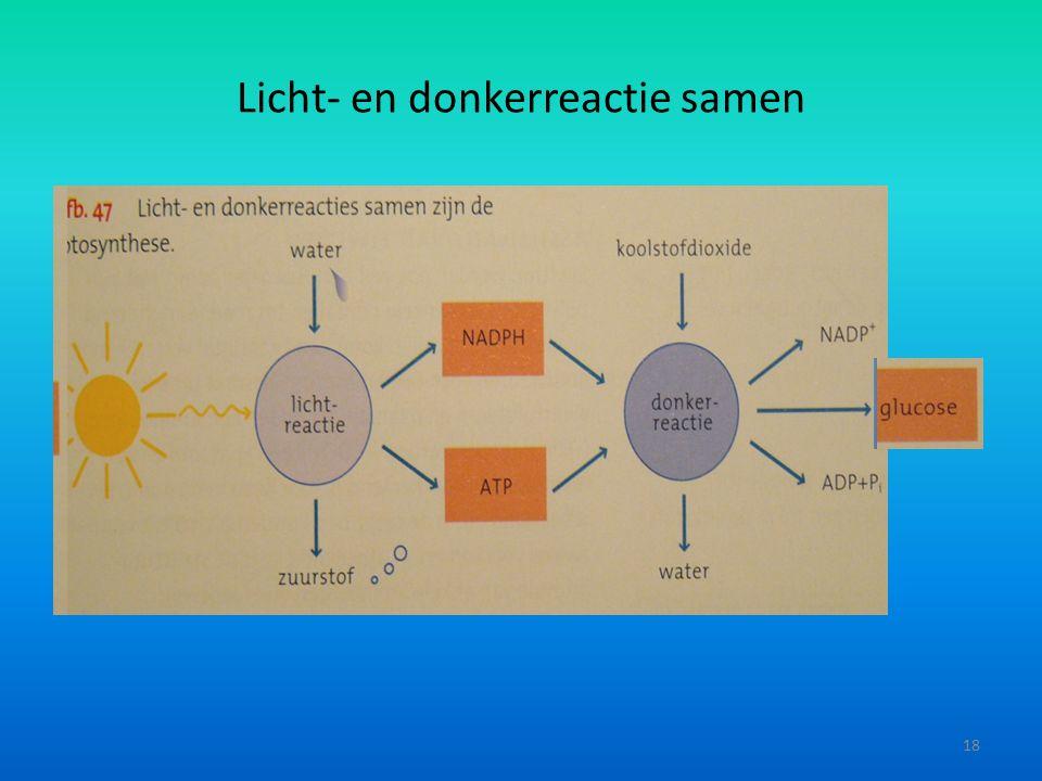 Licht- en donkerreactie samen 18