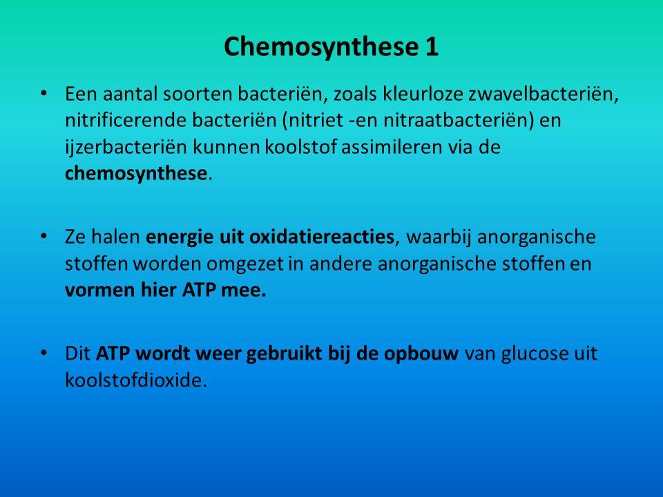 Chemosynthese 1 Een aantal soorten bacteriën, zoals kleurloze zwavelbacteriën, nitrificerende bacteriën (nitriet -en nitraatbacteriën) en ijzerbacteri
