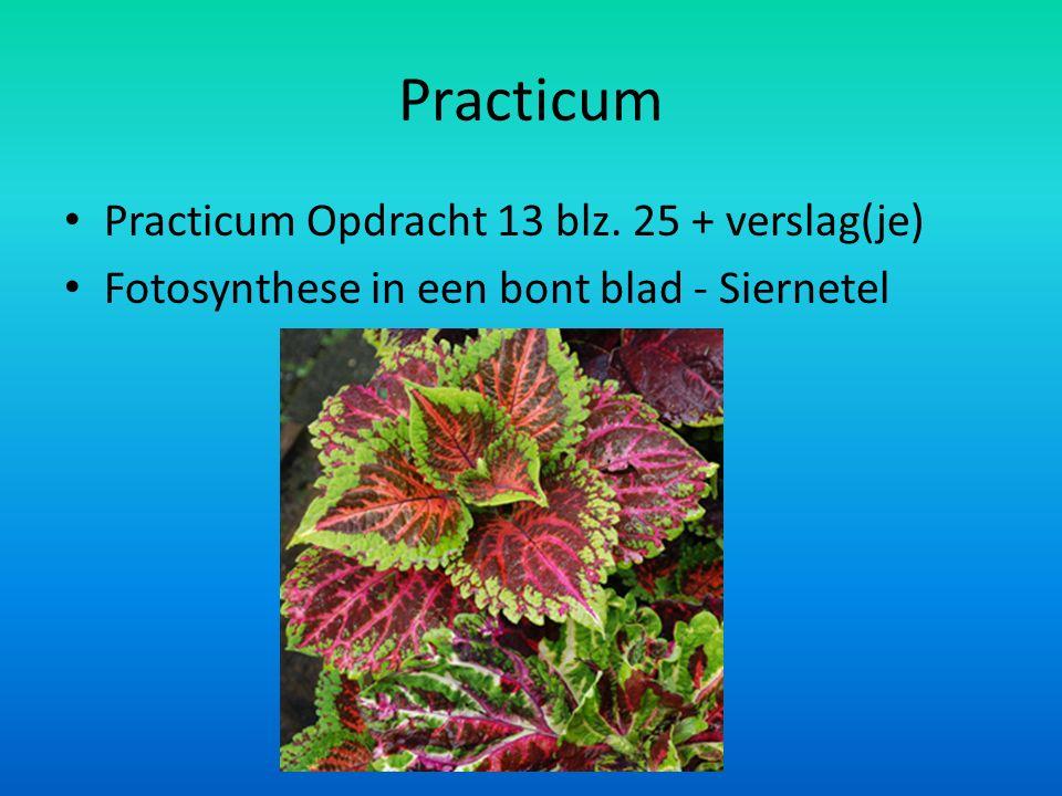 Practicum Practicum Opdracht 13 blz. 25 + verslag(je) Fotosynthese in een bont blad - Siernetel